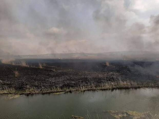Главного инженера компании «Мечела» судят за лесной пожар из-за массовых взрывов