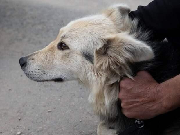 В субботу мобильный пункт вакцинации и стерилизации собак приедет в Авиастроительный район