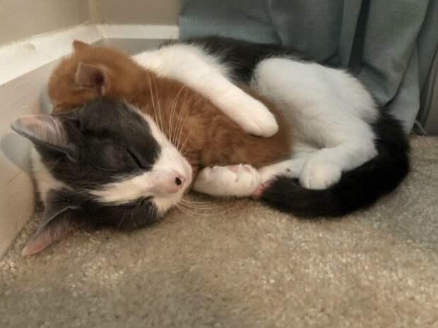 """7. """"Принесли домой бездомного котенка. Теперь у нашей кошки есть новый ребенок"""""""