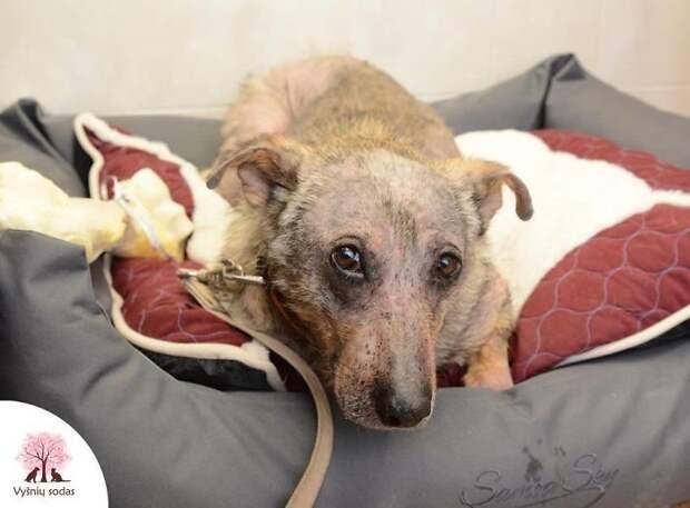 История спасения пса, брошенного умирать голодной смер