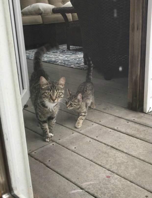 """15. """"Начал подкармливать бездомную кошку возле дома, и это продолжалось около года. Я думал, она толстеет, а она оказалась беременной, и позже привела своих котят к моему порогу"""""""