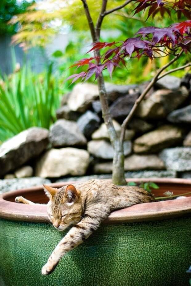 18 доказательств того, что коты — это растения