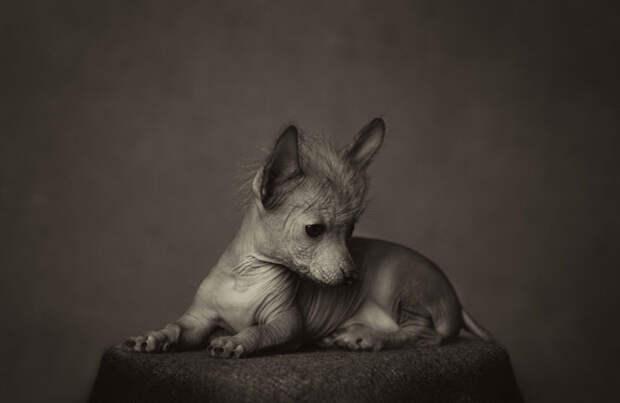 """Сильные портреты животных с """"человеческими"""" эмоциями"""
