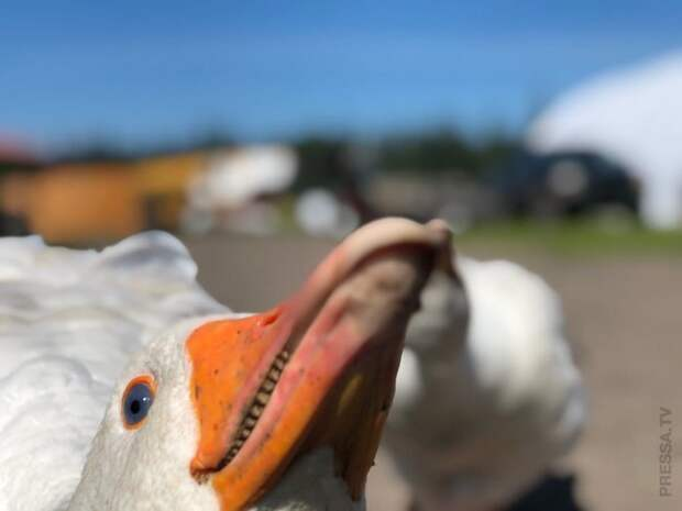 Прикольные животные: фотографии в нужный момент