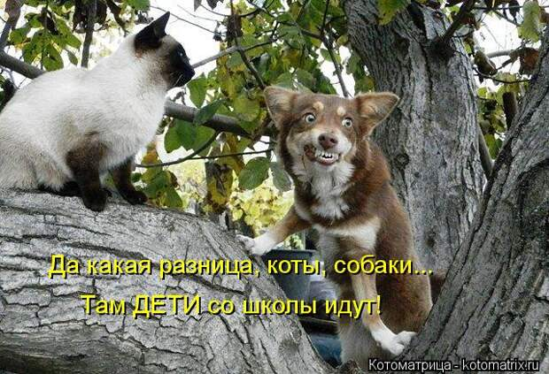 Котоматрица: Да какая разница, коты, собаки... Там ДЕТИ со школы идут!