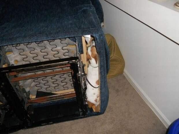 Собачки которые очень хотели спрятаться-20