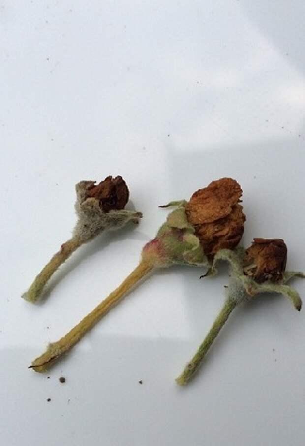 5 приемов борьбы с цветоедом
