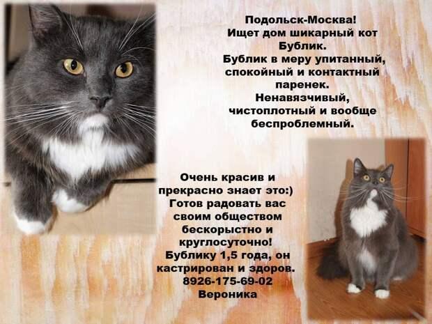 Котейки в поиске дома!