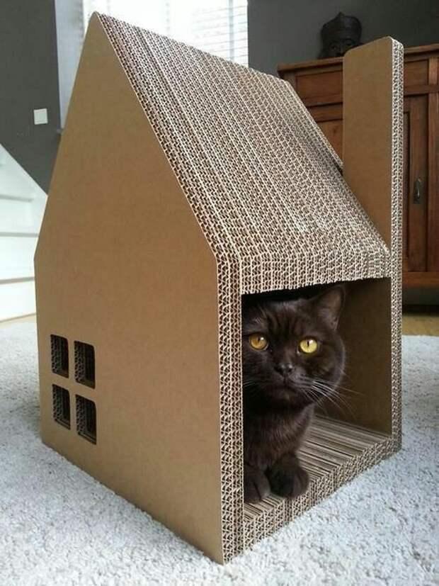 Необычные домики для котов (трафик)