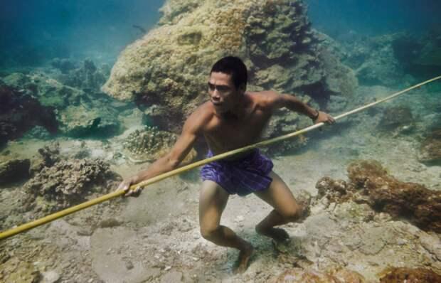 5. Они прекрасно видят под водой наука, факты, это интересно