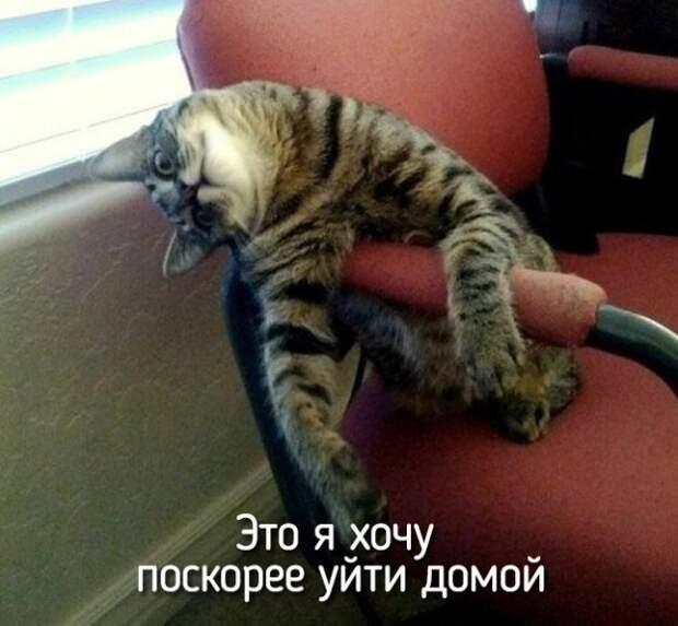 это я кошечка