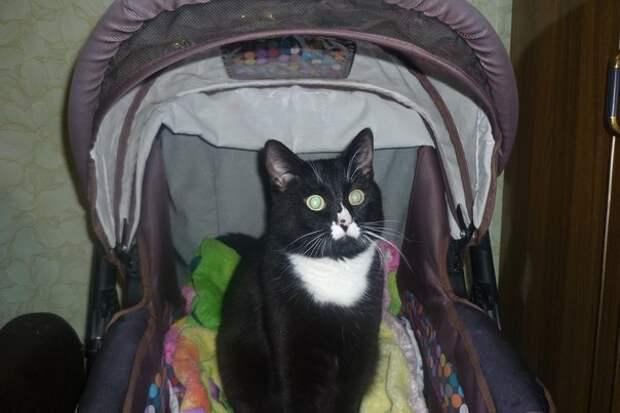 Муж пошёл в магазин а вернулся с двухмесячным котенком...