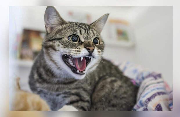 Мама из-за нервов начала на меня орать, но кошка, принимавшая меня за родную, ей это делать не позволяла