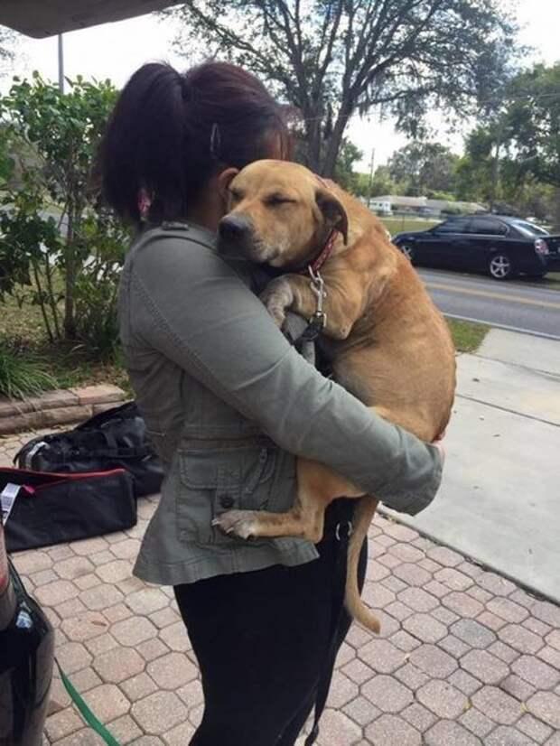 Эта выброшенная собака не может позволить спасателю уйти