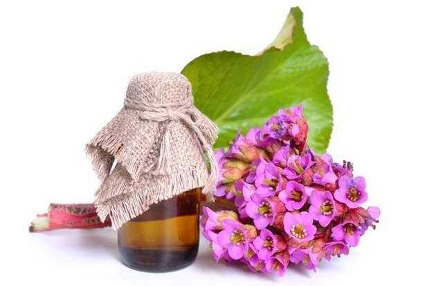 Бадан: эффектные соцветия, целебные корневища