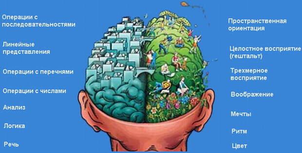 Психологический тест: Какое полушарие мозга у вас развито больше?