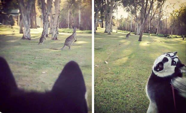 Доказательства того, что хаски самые потрясные собаки на планете