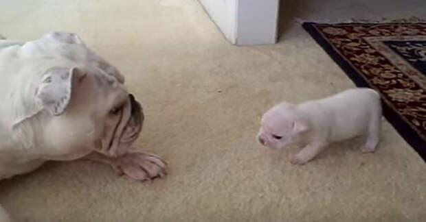 Начало жизни этого щенка выдалось не самым лучшим – он родился с «заячьей губой»