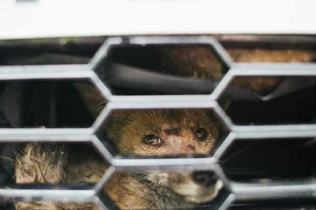 Эпическое спасение лисичек животные, спасение
