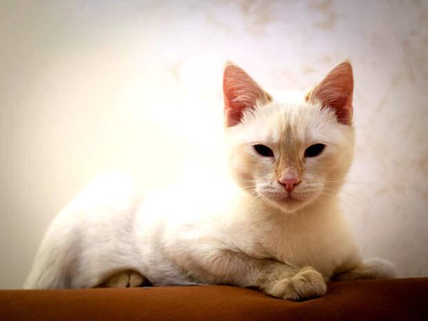 Пятничный котик Тай – ласковый и нежный зверь