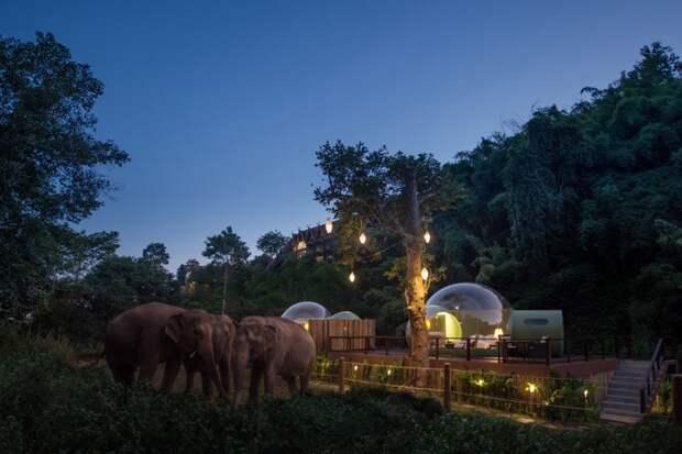 Прозрачные Пузыри в джунглях и отдых среди слонов