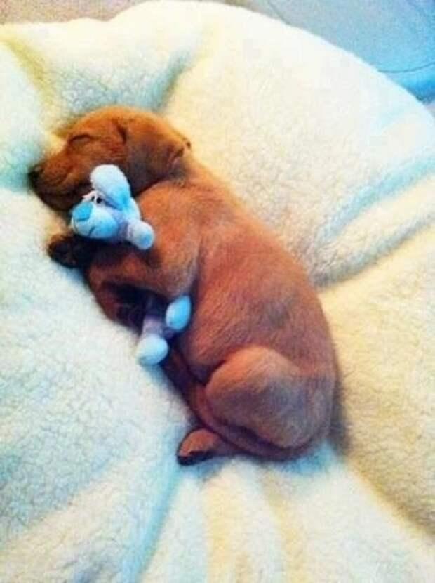 Песик спит