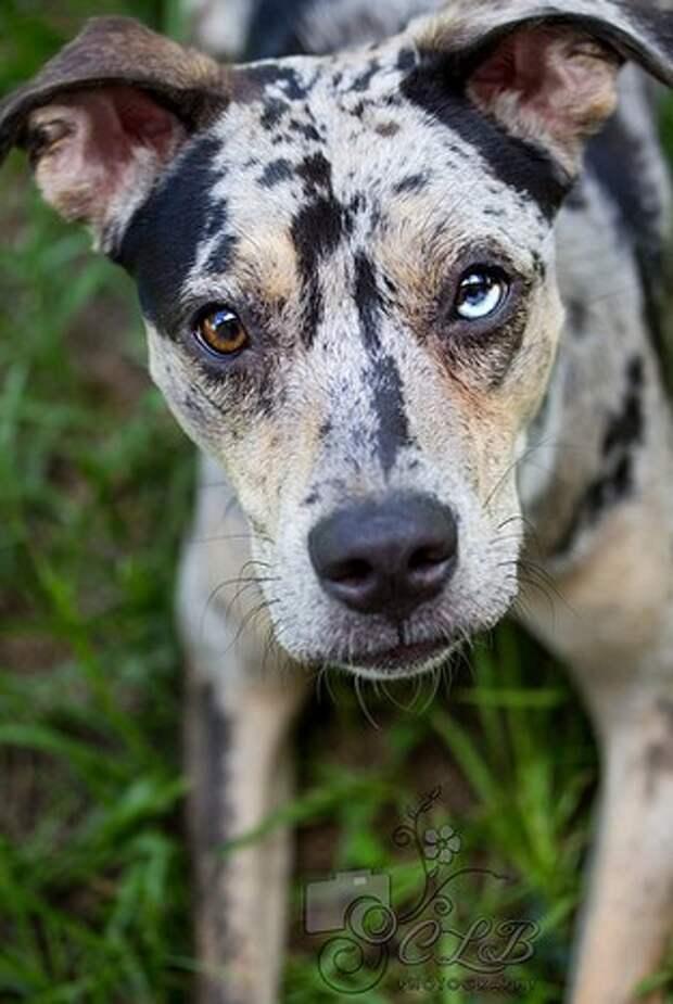 Фотографии животных с гетерохромией