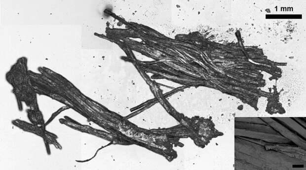 Фрагменты тканей животных, извлеченные из ЖКТ Эци