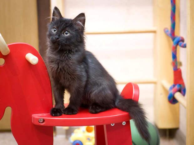 Пятничный котенок Йохан – привидение с моторчиком