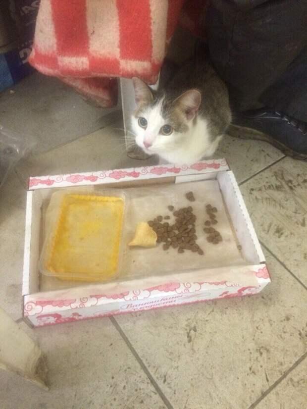 9 жизней у Кота 9 жизней, замерз, кот, сервис
