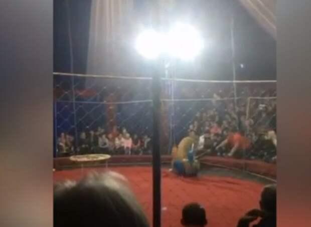 Директора краснодарского цирка, в котором львица напала на ребенка, приговорили к году колонии