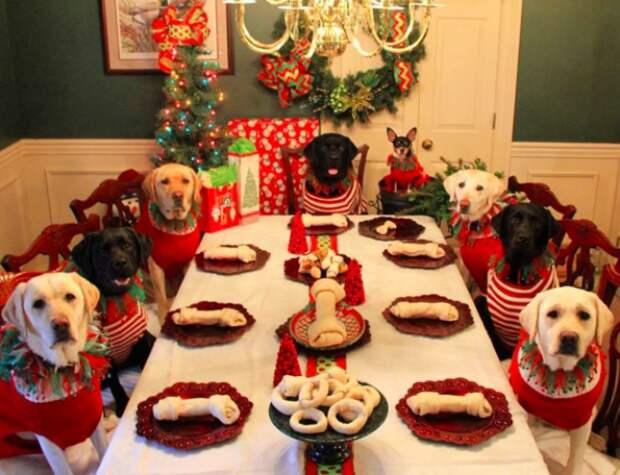 Вот как пара решила встретить Рождество со своими питомцами