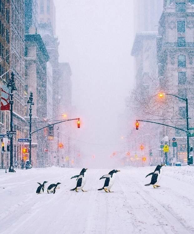 Элитный отряд специального назначения работает под прикрытием на заснеженных улицах Нью-Йорка.