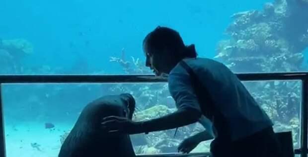Пока в океанариуме нет посетителей, морскому льву провели экскурсию