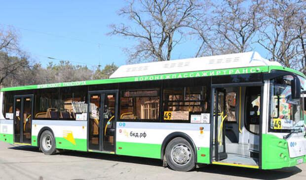 На улицы Воронежа вышли 15 новых больших и низкопольных автобусов