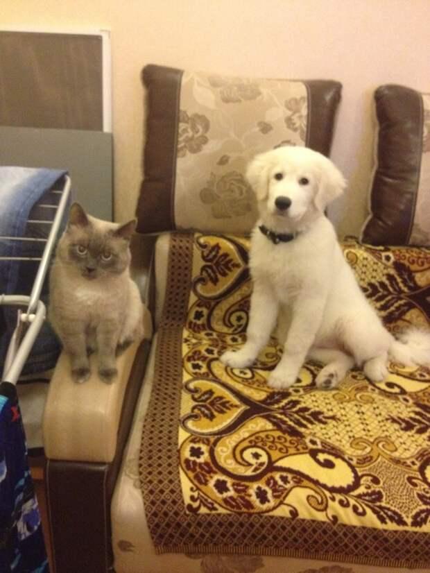 Фото с котом животные, история, коты, прикол, факты