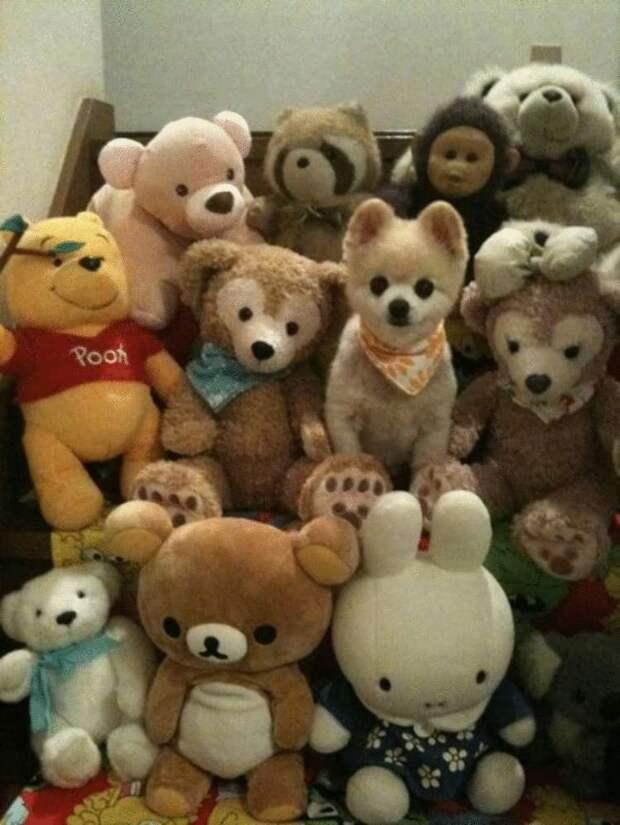 19 песиков, уверенных, что они так хорошо спрятались и их не увидят