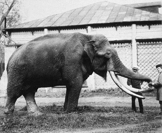 По улицам слона водили: удивительная история Московского зоопарка зоопарк, история, москва