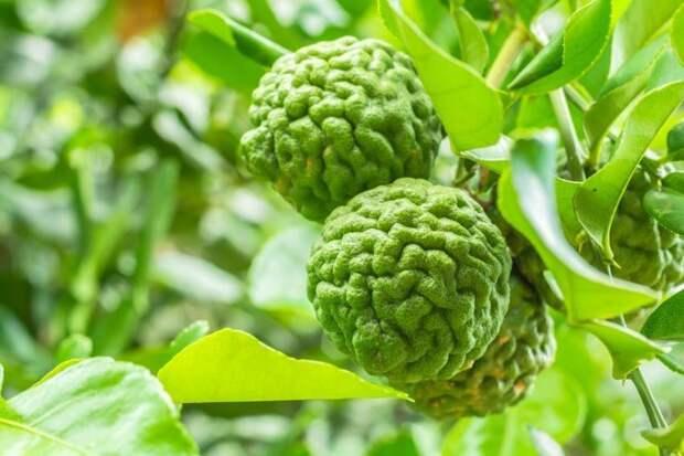 Назван популярный продукт для чая, который способствует долголетию