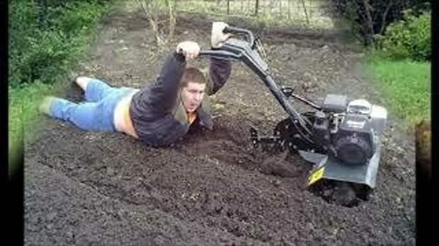 Как не остаться с голым садом