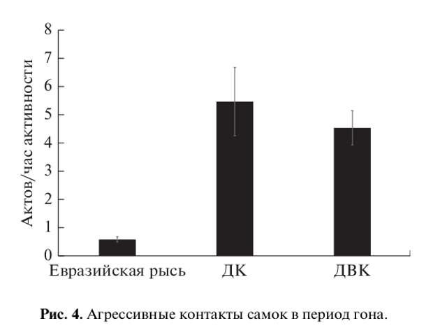 Рис. 4. Агрессивные контакты самок в период гона.