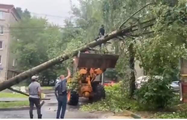 Упавшее дерево на Малой Ботанической повредило окно