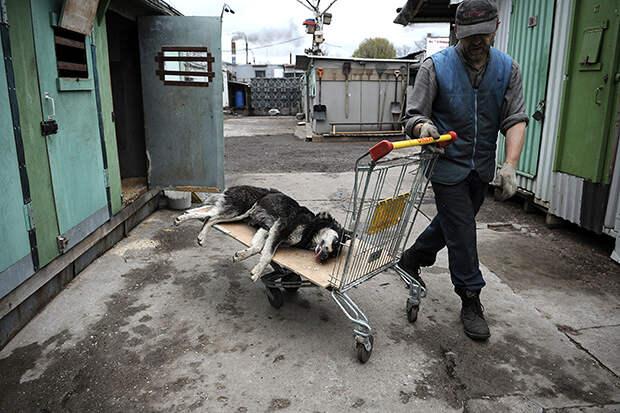 """""""Миллиард псу под хвост"""" - Сколько денег тратят регионы на отлов бродячих животных"""