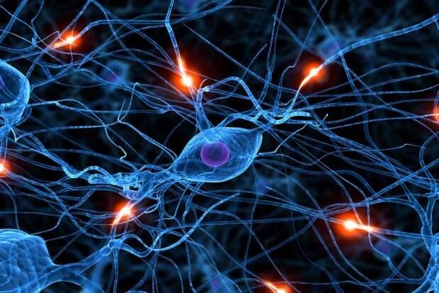 Глюк мозга,который  превращает вас в идиота доводы, мозг