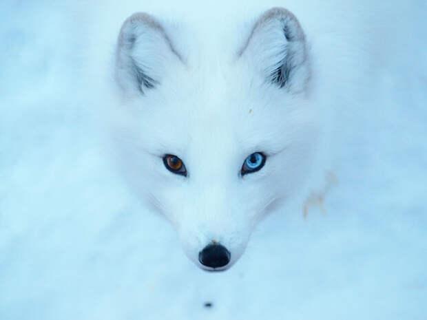 different-eye-color-heterochromia-6__700
