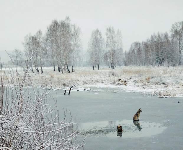Стал искать место, где спуститься к воде, чтобы помочь собаке.  животные, история, спасение