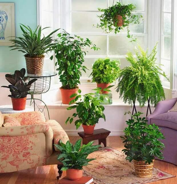Цветы без проблем. Что нужно знать о болезнях комнатных растений