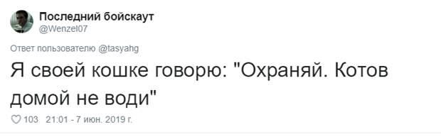 4. Тася Никитенко, животны, забавно, кот, кошка, люди, твиттер, юмор