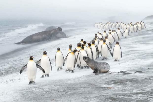 Лучшие фотографии дикой природы от GDT и немного Психологии