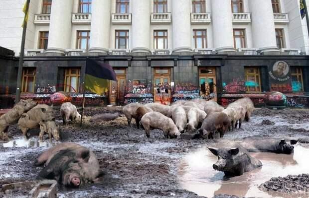 Коррупция на Украине даже на стенах Офиса Президента